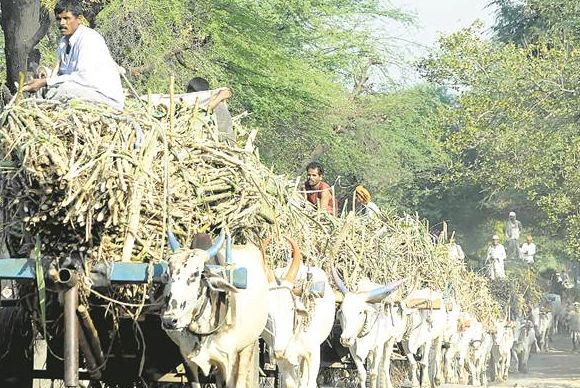 , कोल्हापूरच्या शेतकऱ्यांवर दुहेरी संकट