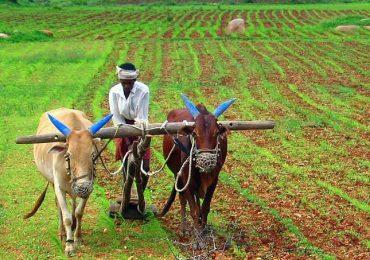 सरकारकडून क्रूर थट्टा, नाशिक-वर्ध्यात फक्त एकाच शेतकऱ्याला नुकसान भरपाई