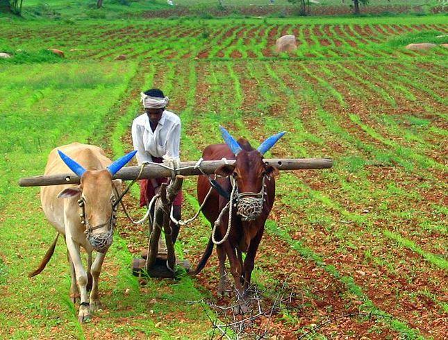 कर्जमाफीची 40 टक्के रक्कमही अजून शेतकऱ्यांच्या खात्यावर नाही!