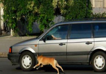 धावत्या गाडीमागे कुत्रे का लागतात?