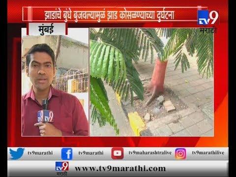 मुंबई : झाडांचे बुंधे बुजवाल्यास आता मुंबईकरांना दंड भरावा लागणार