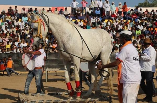 , बुलेटवर चारपायी, त्यावर घोड्याचा डान्स