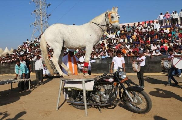 बुलेटवर चारपायी, त्यावर घोड्याचा डान्स