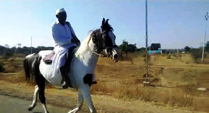 अपघाताच्या भीतीपोटी आजही घोड्यावरुन प्रवास करणारे आजोबा