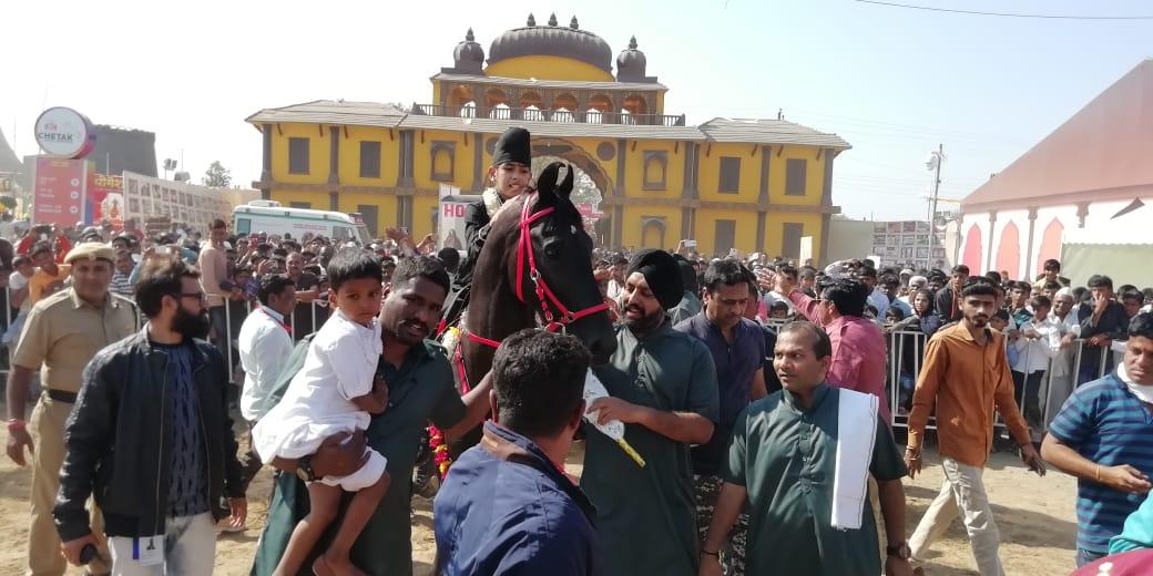 वय वर्षे 11, तब्बल 350 किमी घोडेस्वारी करत राजवीर सारंगखेड्यात दाखल