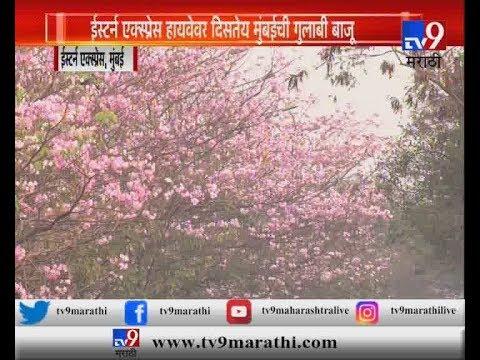 ईस्टर्न एक्स्प्रेस हायवेवर दिसतेय मुंबईची गुलाबी बाजू