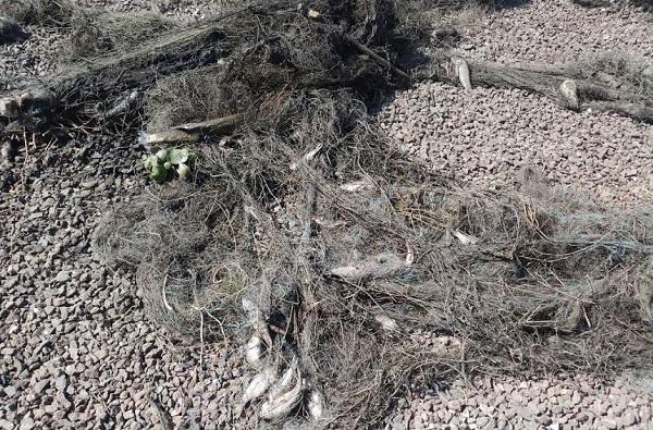 Onion news, नाशिकच्या शेतकऱ्यांनी अज्ञात कृषीमंत्री शोधले, आठ मागण्या मांडल्या