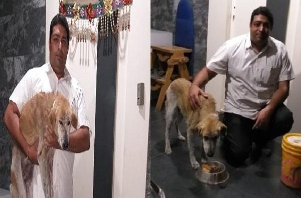 News in Pune, तेरी मेहरबानियाँ! पुण्यात कुत्र्याने हार्ट अटॅक आलेल्या मालकाचा जीव वाचवला