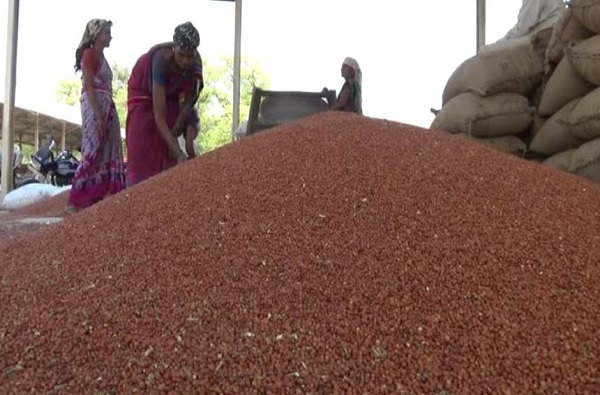 , शेतकऱ्यांवर नवे संकट, 8 हजार 856 क्विंटल तुरीला शून्य किंमत