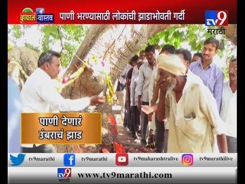 महाराष्ट्रात कुठे आहे, पाणी देणारं चमत्कारिक झाड?