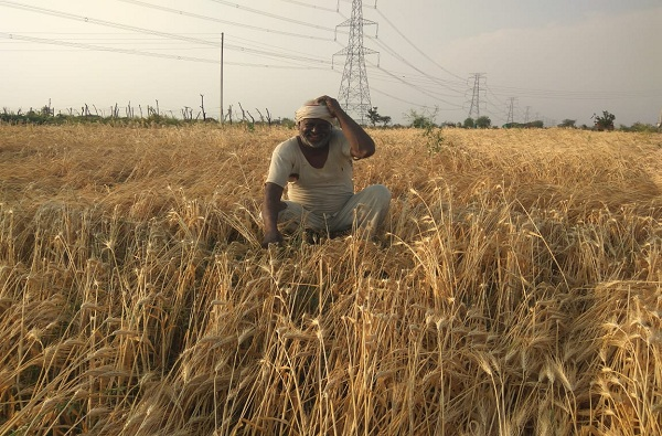 1 लाख 37 हजाराचं कर्ज, मात्र शेतकऱ्याच्या खात्यात 1 लाख 17 हजारच जमा