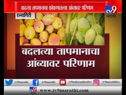 वाढत्या तापमानामुळे यंदा आंब्याचं उत्पादन कमी?