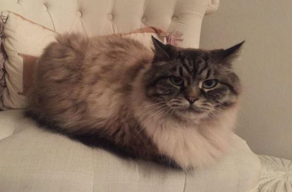, प्रेयसीच्या हट्टासाठी चक्क मांजर चोरली