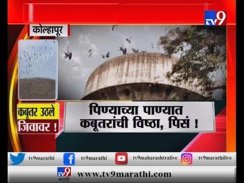 कोल्हापूर : पाण्याच्या टाकीत हजारो कबूतरांची विष्ठा, नागरिकांचं आरोग्य धोक्यात