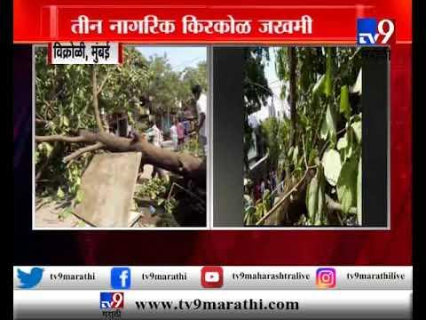 विक्रोळीत बदामाचं झाड कोसळल, 3 नागरिक जखमी