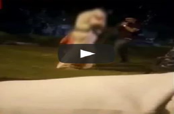 VIDEO : पोलिसांची महिलेला शिवीगाळ करत पट्ट्याने मारहाण