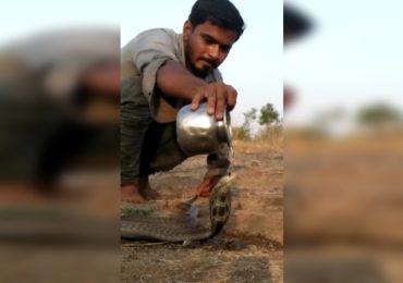 VIDEO : तहानेने व्याकूळ नाग फणा काढून उभा, नागाची तहान शेतकऱ्याने भागवली