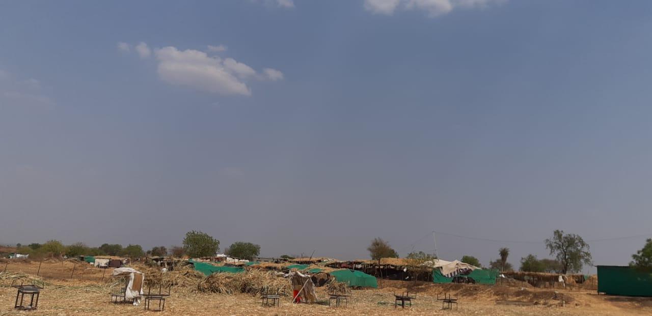 , ऑपरेशन चारापाणी… हतबल शेतकऱ्यांची कहाणी