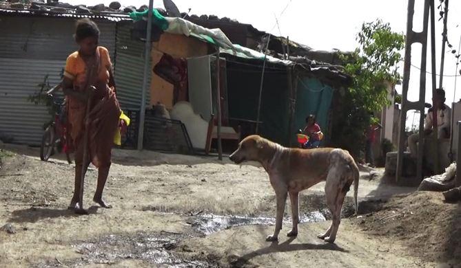 Bring Jackson Home, चोरी झालेल्या कुत्र्याला शोधण्यासाठी 5 लाखाचं बक्षीस, विमानाने संपूर्ण शहरात शोधाशोध