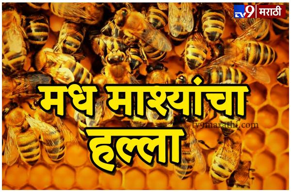 , राजगडाच्या पायथ्याशी 200 जणांवर मधमशांचा हल्ला
